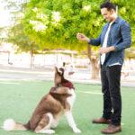 Mantenga la diversión en el adiestramiento de perros 101